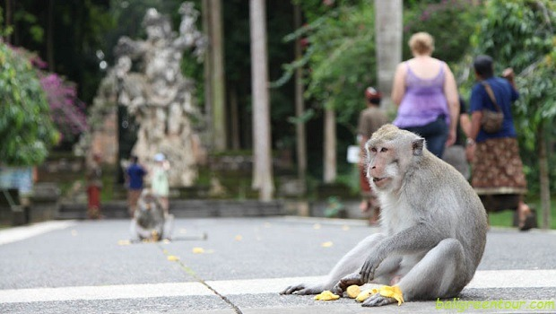 Sangeh Monkey Forest - Bali Interest Place to visit