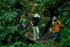 rainforest-trekking-bedugul-indonesia-1152_13590251083-tpfil02aw-11321