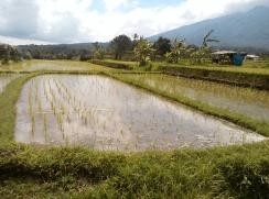 Jatiluwih trekking with Bali Jungle Trekking