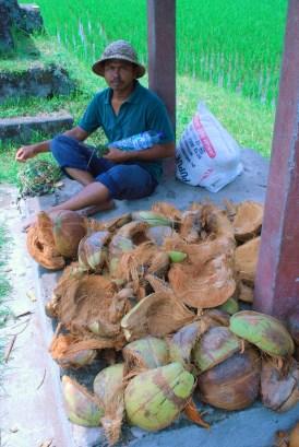 Coconuts and Shade