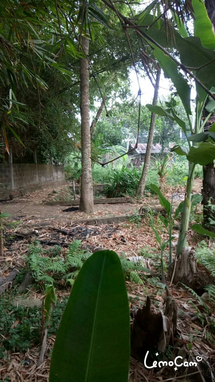 Land 4250 sqm for 25 years lease in Seminyak Bali