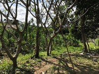 Land 6019m LCGU 601 for sale in Pererenan Canggu Bali