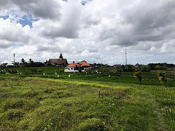 Land 575 m2 LCGU 575 for sale in Canggu Bali