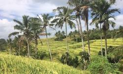 Noord Bali Excursie