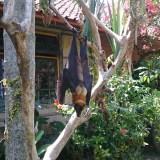 Journée piscine a Ubud au Ubud Inn - balisolo 2015 (36)