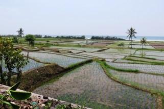 Sortie culturelle à Jembrana (ouest de Bali) avec Agus - Balisolo 201511 (75)