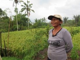 Balade dans les rizères de Langgahan avec Made Ocong - Balisolo (15)