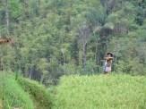 Balade dans les rizères de Langgahan avec Made Ocong - Balisolo (17)
