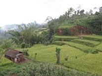 Balade dans les rizères de Langgahan avec Made Ocong - Balisolo (20)