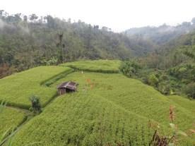 Balade dans les rizères de Langgahan avec Made Ocong - Balisolo (21)