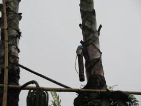Balade dans les rizères de Langgahan avec Made Ocong - Balisolo (34)