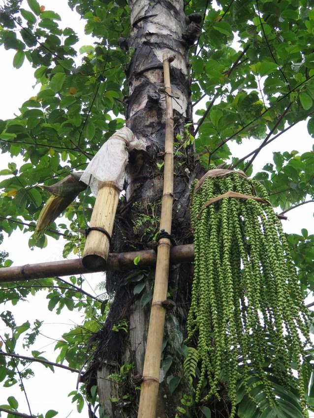 Balade dans les rizères de Langgahan avec Made Ocong - Balisolo (40)