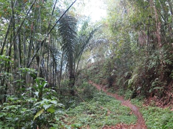 Balade dans les rizères de Langgahan avec Made Ocong - Balisolo (9)