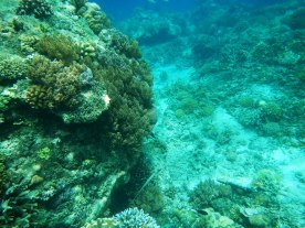 Snorkeling a Gili Trawangan - Balisolo (13)