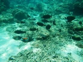 Snorkeling a Gili Trawangan - Balisolo (27)