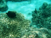 Snorkeling a Gili Trawangan - Balisolo (35)