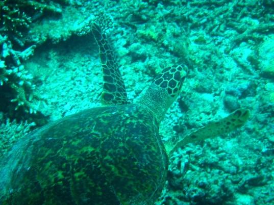 Snorkeling a Gili Trawangan - Balisolo (6)