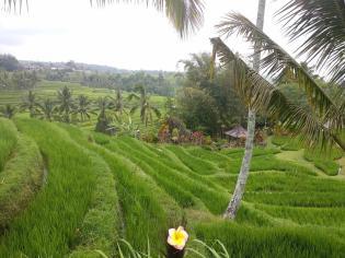 Asih guide francophone à Bali - Balisolo (12)