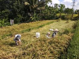 Asih guide francophone à Bali - Balisolo (15)