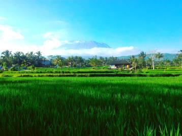 Christian Sura, guide francophone à Bali Sulawesi - Balisolo (5)
