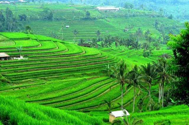 Jati Luwih Rice Terrace, Bali