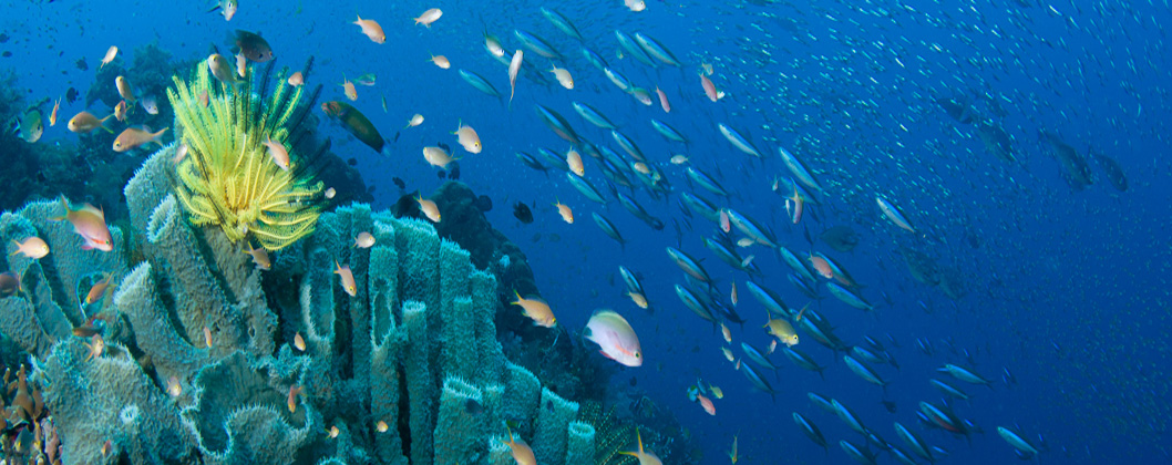 Reef scene with schooling fish and sponges, Halmahera, Indonesia