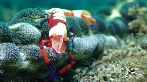 Bali Underwater Photo Safari