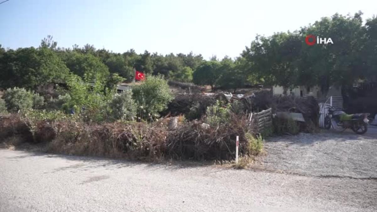 Foça'da kara keçisinin nesli tükenme tehlikesi altında