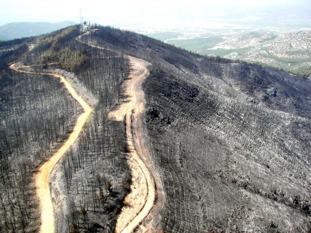 İzmir ve Manisa'da küle dönen ormanlık alanlar artık yemyeşil
