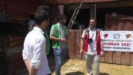Türk kurumları Kuzey Makedonya'da kurban kesti