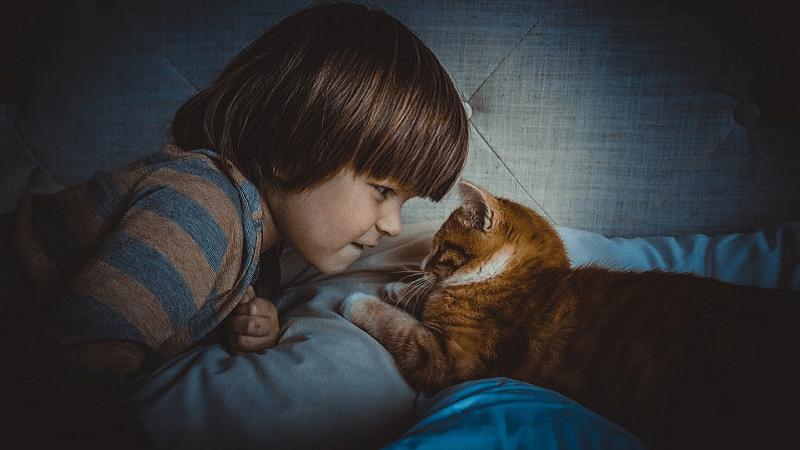 Kako nam mačke poručuju da ih nešto boli