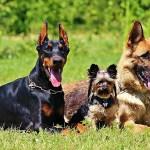 U Aleksincu nestalo 12 pasa za 2 dana