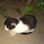 Dvizac: Marko – mačka koja je ispala veći čovek od mnogih ljudi koje znam.