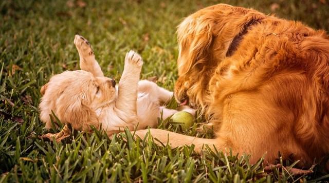 Dokazano: Psi nas razumeju
