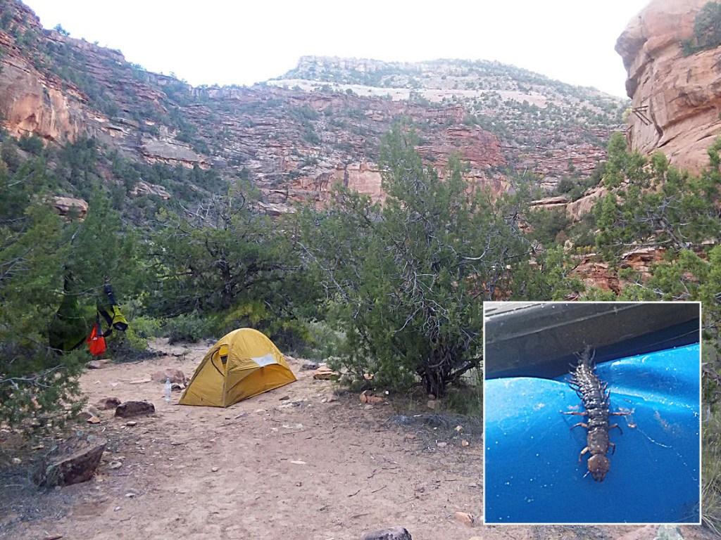 Dolores via San Miguel - Camp with hellgrammite