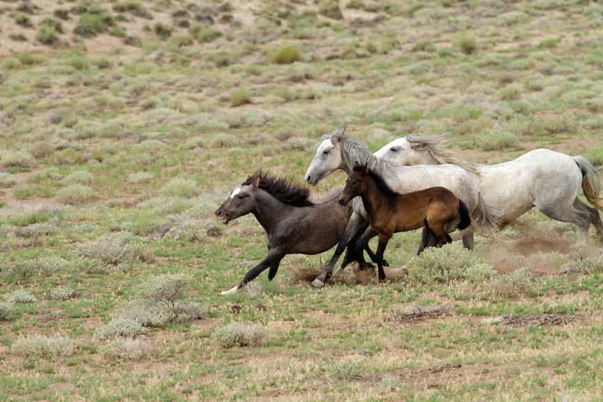 wild horses southwest colorado