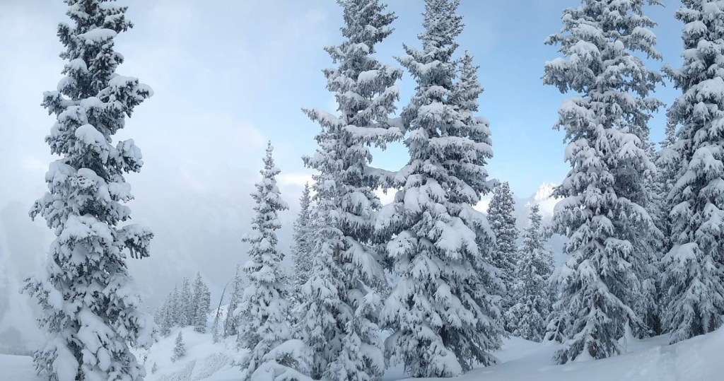 snow-covered-pine-trees-seen-while-backcountry-skiing
