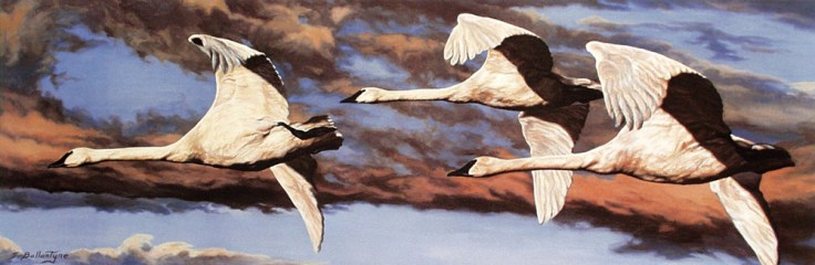 "Freedom of Flight 12""X 36"" Acrylic on Canvas Ducks Unlimited Art Print Portfolio 2001"