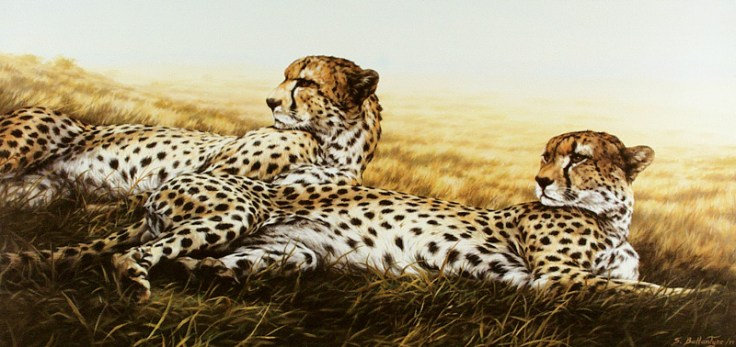 "Siesta (Cheetahs) 18""X 36"" Acrylic on Canvas"