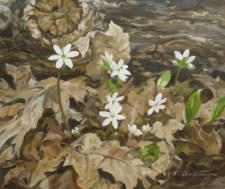 "Woodland Flowers 5.5"" x 6.5"" Oil on Panel"