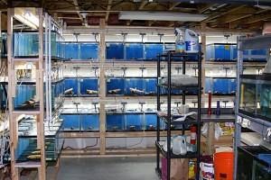HMF aquarium filtration at Brian's Tropicals