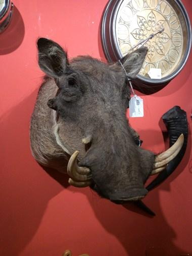warthog2