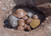 Ball Clay Studio How to Pit Fire Pottery Clay Without a Kiln