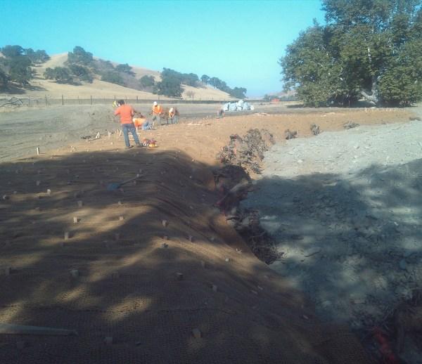 Job 178 - SFPUC San Antonio Creek Restoration & Revegetation