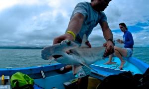 The Shark Quest - Photo by David García
