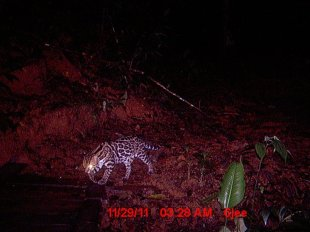 nocturnal-hike-south-pacific-costa-rica