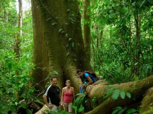 rainforest-experience-south-pacific-costa-rica