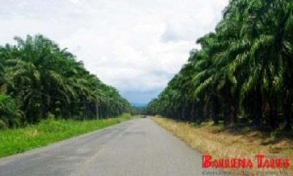 Beautiful Way to Sierpe de Osa - Costa Rica - Photo by Dagmar