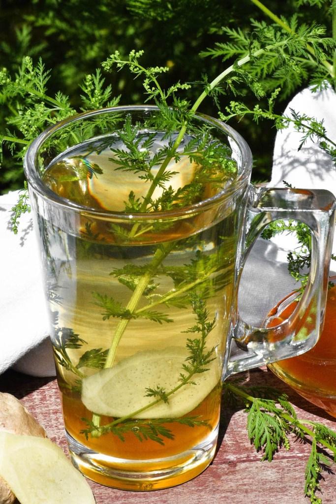 Beifuß-Ingwer-Honig Tee-Heilkraut-ballesworld