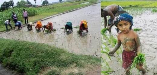 कहीं रूक रूक कर, कहीं लगातार हो रही बारिश, किसानों के चेहरे खिले